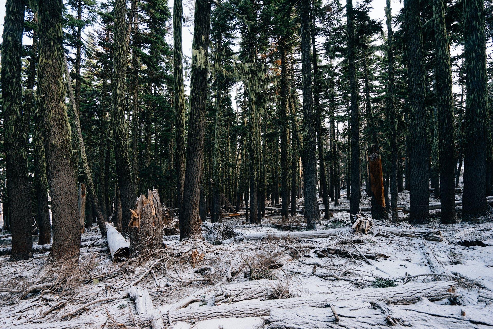fallen tree, forest, moss