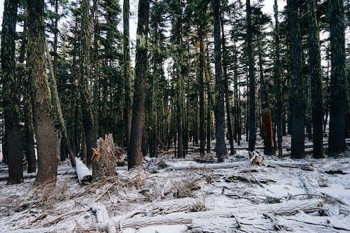 Darmowe zdjęcie z galerii z las, mech, upadłe drzewo