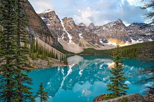 Pins Verts Près Du Lac Et De La Montagne Couverte De Neige