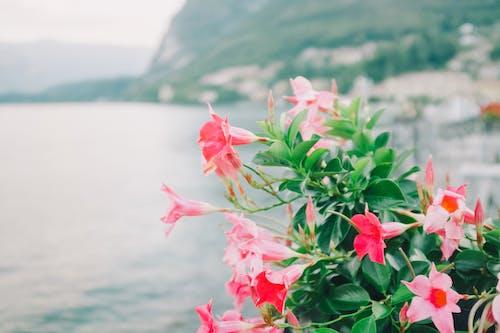 Základová fotografie zdarma na téma cestování, čistota, como lake, divoký