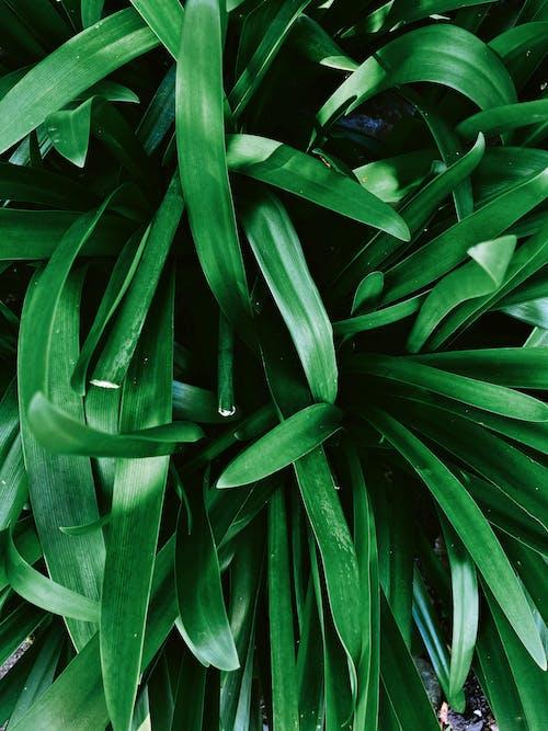 Бесплатное стоковое фото с безмятежный, Биология, ботаника, весна