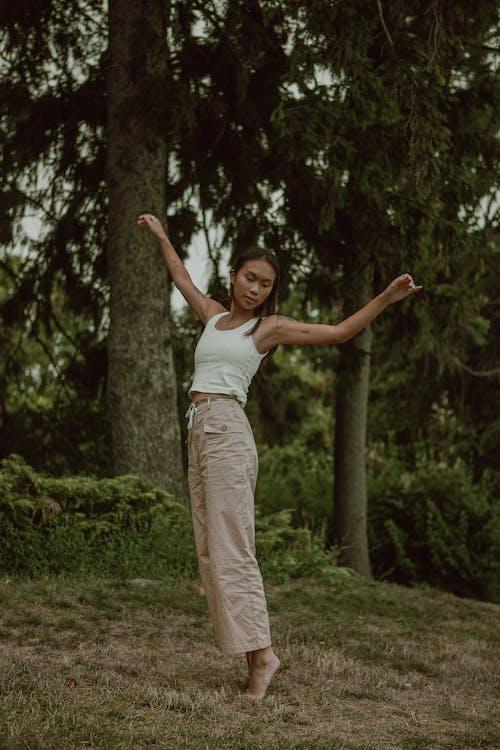 Fotos de stock gratuitas de árbol, armonía, asiática