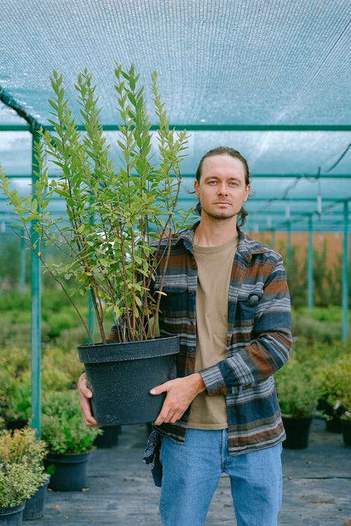 Calm male gardener in casual wear holding tall green plant in big pot while working in hothouse and looking at camera