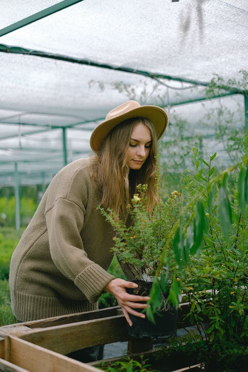 Attractive calm female gardener wearing warm sweater and hat placing verdant potted plant on wooden bench in modern hothouse