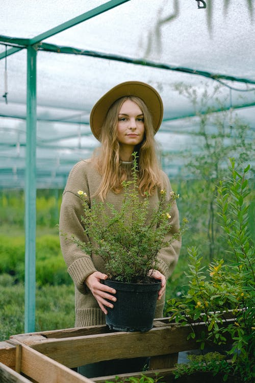 Content young female gardener in warm sweater and hat standing with lush green plant near display bench in modern hothouse and looking at camera
