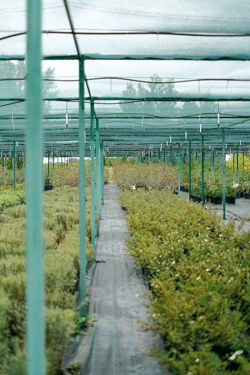 Kostenloses Stock Foto zu agronomie, arbeitsplatz, außerorts