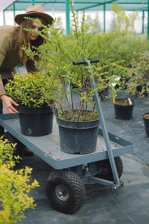 Female gardener putting potted plant on farm cart