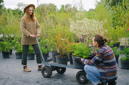 Content gardeners wearing casual outfits placing lush verdant plants on wheelbarrow while working together in botanical garden and looking at each other with smile