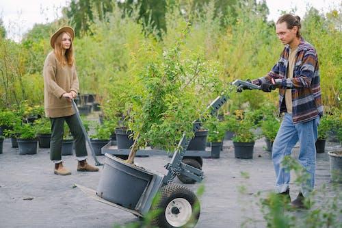 Gardeners moving heavy plants on cart in garden