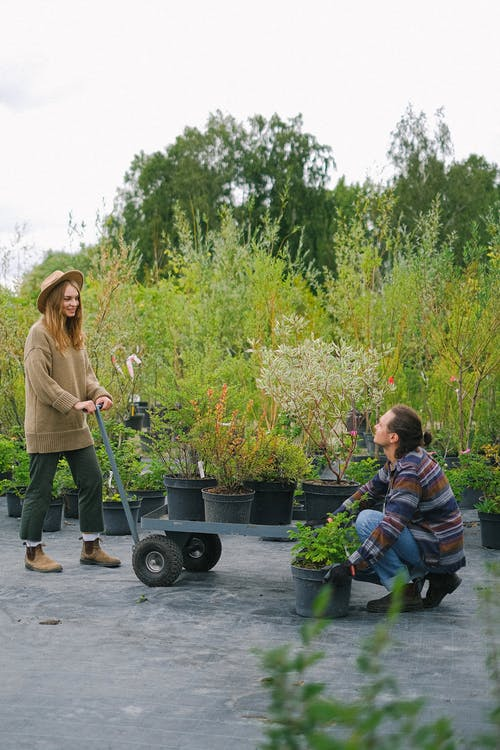 Full body positive young gardeners wearing casual outfits with cart filled with potted plants working in botanical garden and looking at each other