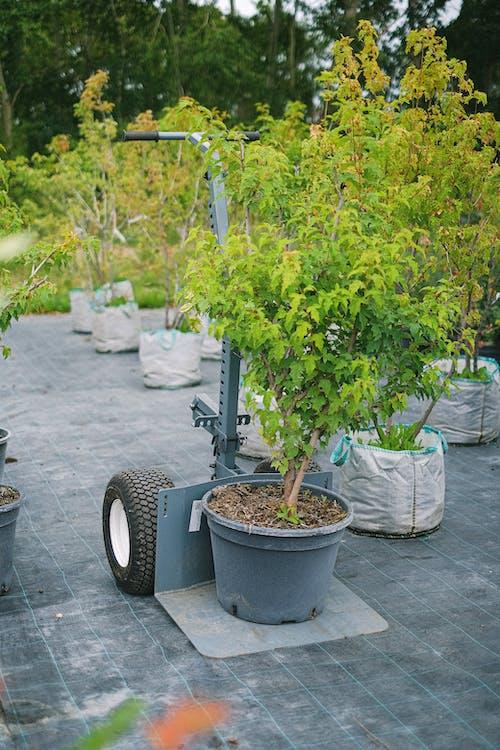 Kostenloses Stock Foto zu agronomie, arbeitsplatz, ausrüstung
