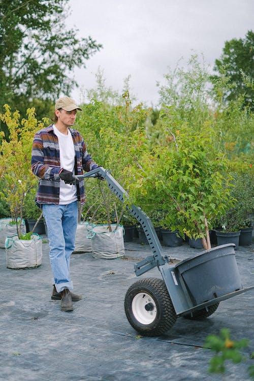Gardener carrying big plant on farm cart