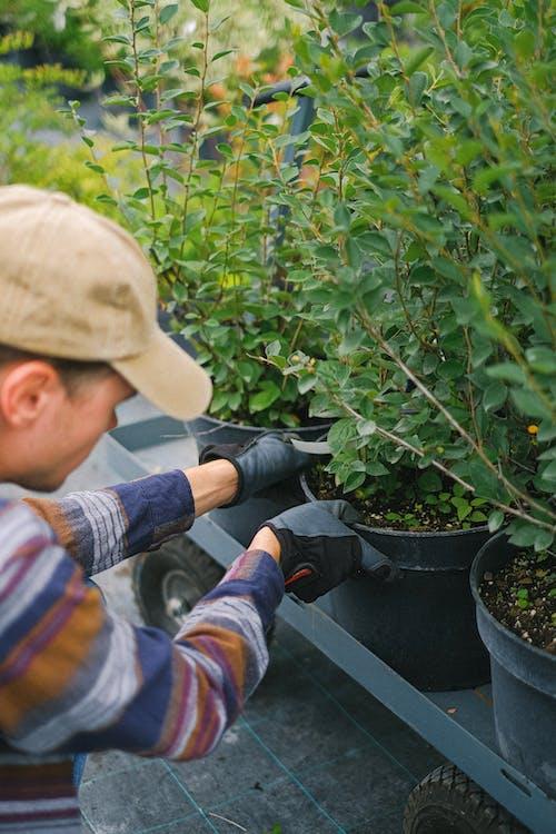 Gardener putting potted plants on garden trolley
