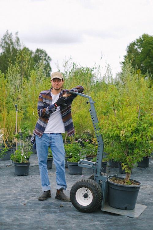 Бесплатное стоковое фото с био, ботанический, все тело