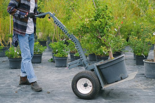 Gardener carrying trolley with plant in pot