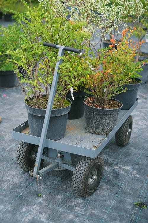 Potted plants placed on garden cart