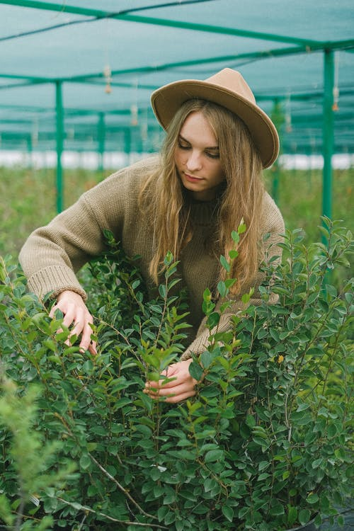 Serious woman working in hothouse with plants with green foliage cultivating for landscaping