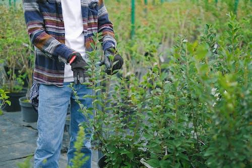 Gardener carrying trolley with green bush seedlings