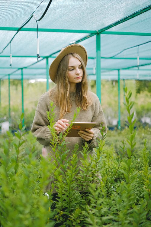 Woman in hat standing with tablet for finding digital information about plants cultivating in greenhouse