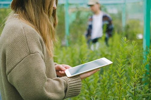 Woman using tablet for photographing plants in greenhouse