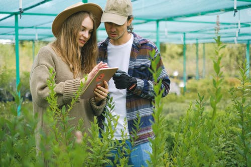 Focused couple searching information in farm
