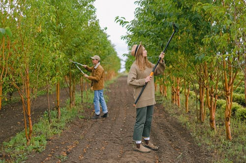 Farmers caring about trees growing in orchard