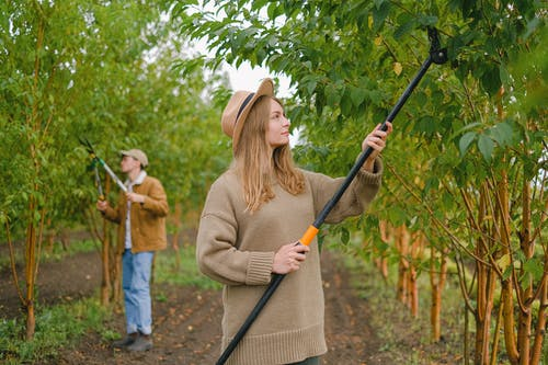 Woman with pole pruner cutting green leaves and branches while working with colleague in garden