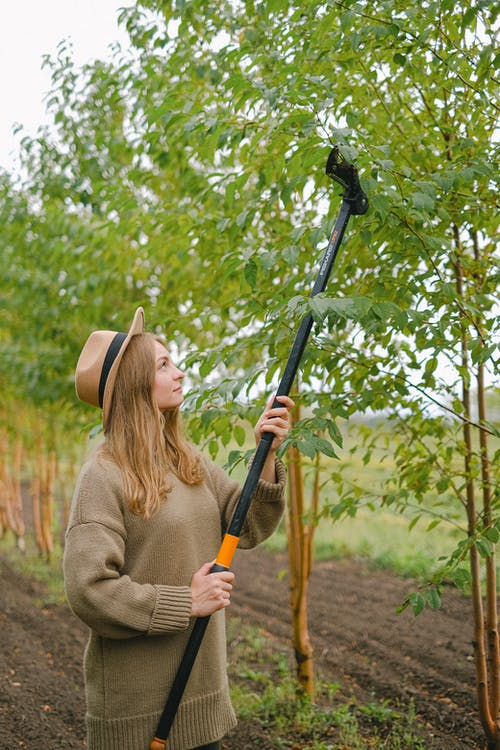 Young woman with modern gardening tool cutting twigs of tree