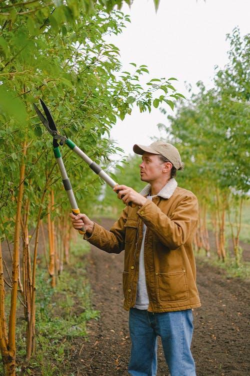 Man cutting branches on bush
