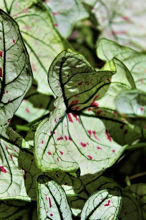 Photos gratuites de centrale, feuilles, plante