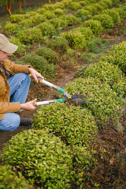 Crop gardener cutting bush on farm
