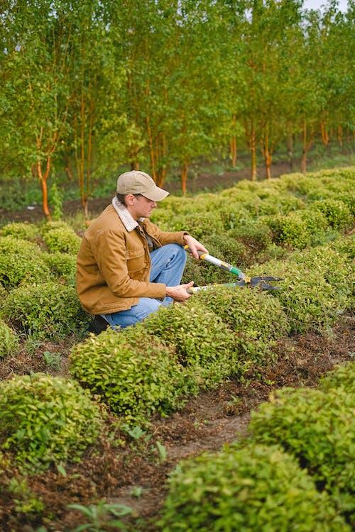 Man with tool cutting bush
