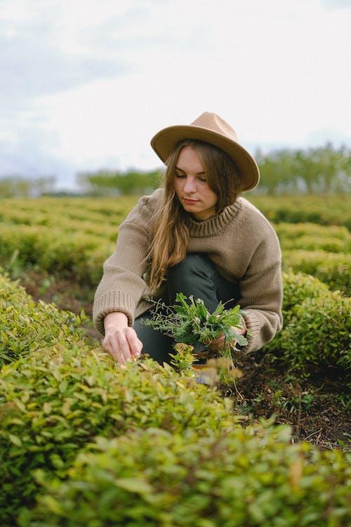 คลังภาพถ่ายฟรี ของ การเกษตร, ข้างนอก, งาน