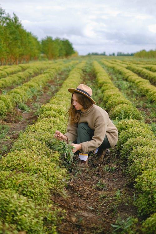 คลังภาพถ่ายฟรี ของ การผลิต, การเกษตร, การเจริญเติบโต