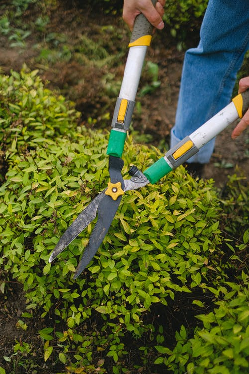 From above of unrecognizable gardener with pruner shear standing near green plant while working in agriculture field during seasonal work