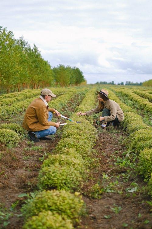 Foto stok gratis agrikultura, agronomi, alam