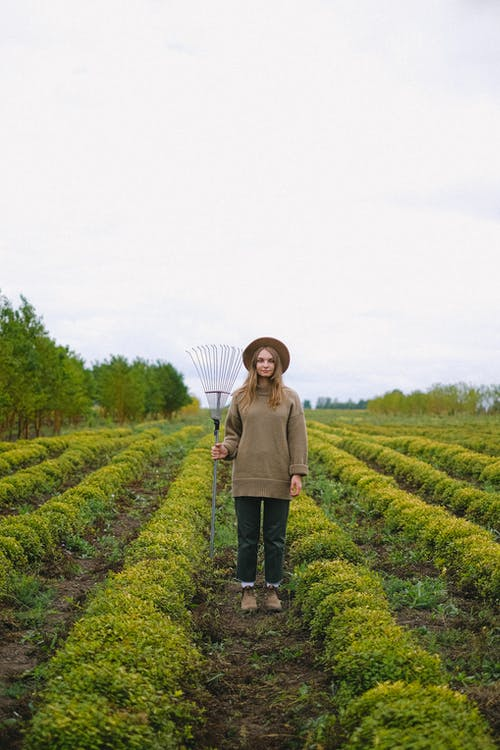 Full body of female farmer with rake standing between rows of green plants in agricultural field