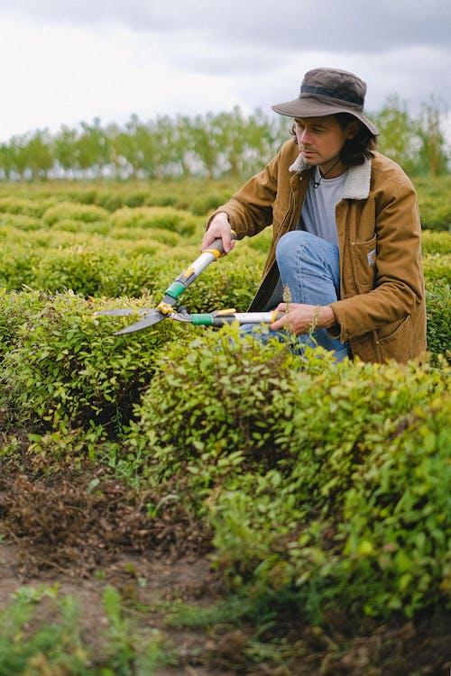 Kostnadsfri bild av agronomi, arbetare, arbete, bearbeta