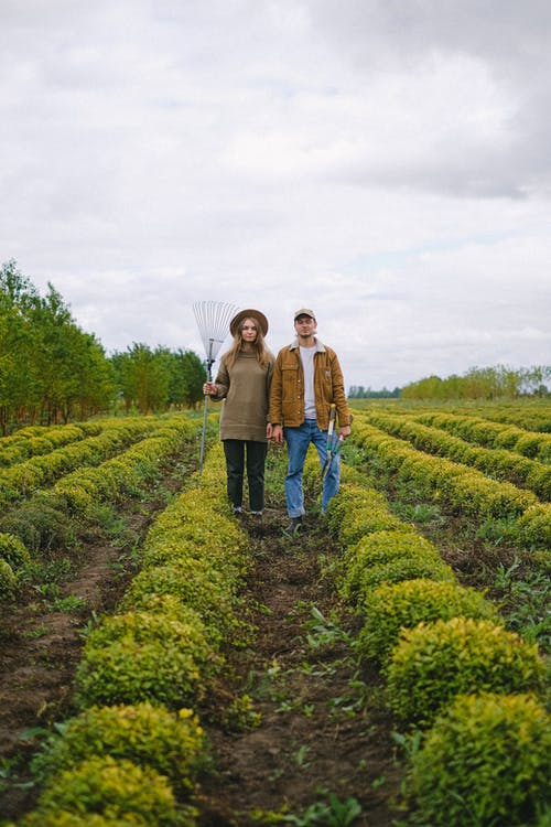 Full body of gardeners with rake and secateurs standing on plantation of greens in farm