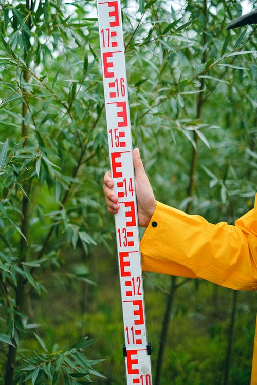 Person with ruler inspecting height of plants