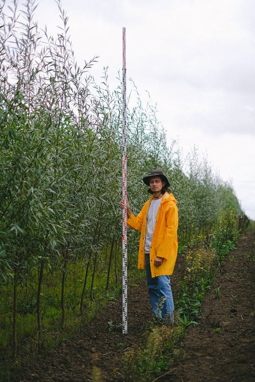 Full body of male farmer with ruler standing in field with trees and examining height