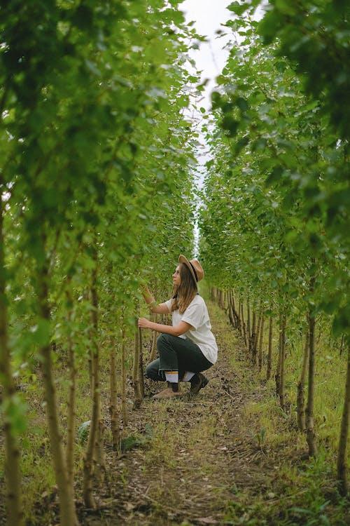 Kostnadsfri bild av agronomi, anställd, arbetare, arbete