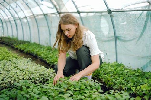 Gratis stockfoto met agronomie, arbeider, baan, bezetting