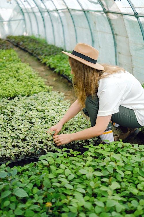 Gratis stockfoto met aarde, achterlaten, agronomie