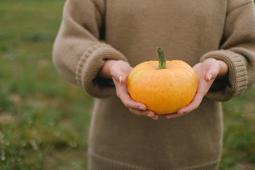 Gratis stockfoto met agronomie, akkerland, anoniem, arbeider