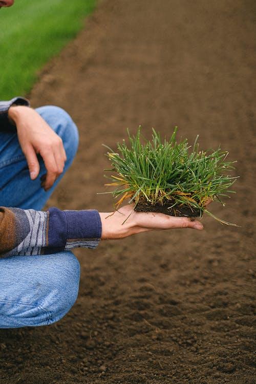 Gratis stockfoto met aarde, agronomie, akkerland, anoniem