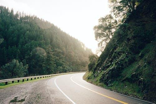 Základová fotografie zdarma na téma křivka, silnice, sluneční paprsek