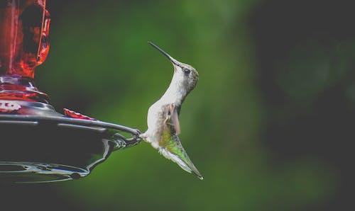 Cute hummingbird sitting on bird feeder