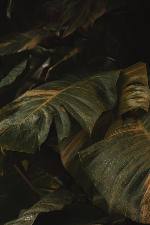 Gratis arkivbilde med biologi, blad, falle, kunst