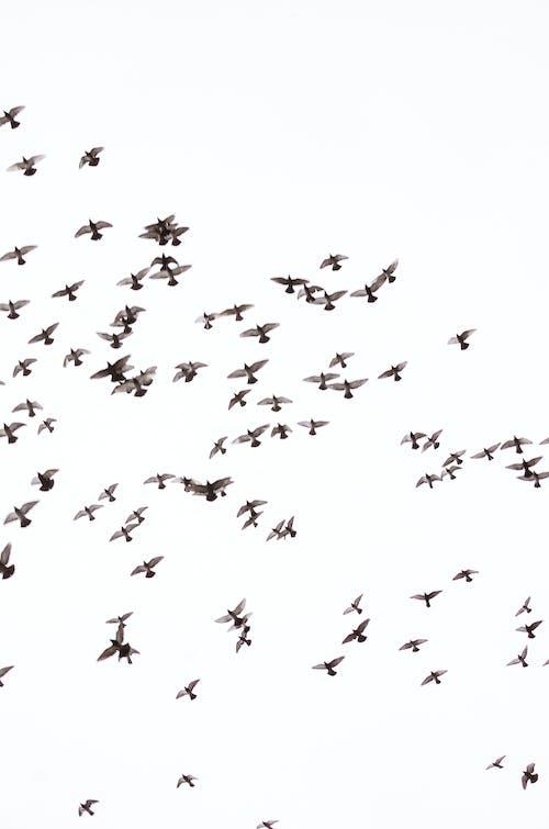 Gratis lagerfoto af due, dyr, dyreliv, fjer